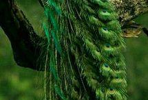 Peacocks of India