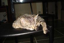 """La mia adorata gattina Micia / questa e la mia bambina """"pelosetta"""" ^_^"""