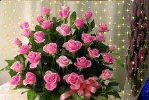Krása kvetov