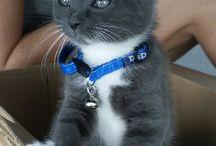 Kitties!