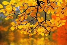 FALL  / Oh, how I love Fall!! ~ It is the most glorious season of all! / by Mary-Ellen
