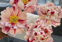 kvety,postupy,vsetko....!