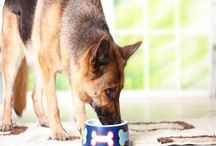 Canine Nutrition Information / It's all well and good to have a board on Homemade Dog Foods and Treats, but what about information about nutrition for your pooch . . . here are articles and information we've found out on the web that may help you with healthy choices for you fur- friend