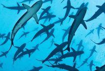 oceanic creatures