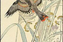 birds botanics