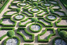 ogrodowe piękności / interesujące rośliny