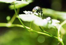 aqua plants / 水景画、その素材となる水草、その他に関しての画像です