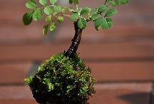 Moss n Bonsai