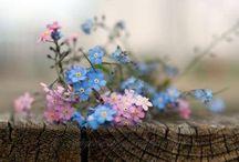 Flower  / Flowers make my heart so sweetly.