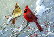 Cardinals in winter / Cardinals