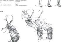 Anatomy ✤ Legs