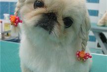 cãozinho lindo