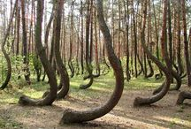 Trees are Splendid