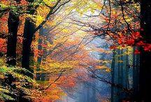 森 山 渓谷 自然風景