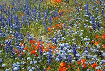Wildflowers, my favorite! / by Ellen Gerwig