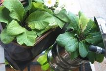 ataletçe ehlikeyifbahçe.. my garden blog