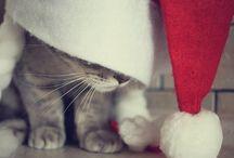 Gatos!!!! / by Anyta Fernandez