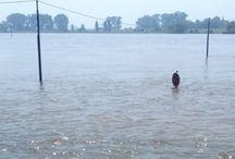 Am Rhein / Rhein, Strandgut, Treibgut, Angeschwemmtes, Wasser, Schiffe, Fundstücke, Muscheln