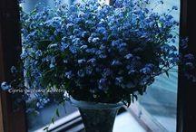 Blue kwiaty