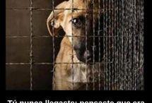 Conciencia hacia nuestros amigos animales