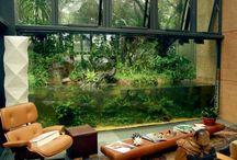 Akvariumdrømmer