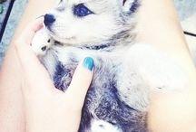 cute little things.