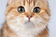 Schöne Katzen
