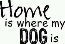 Dog Lover /Animal Lover♥ / by 💅 👠💋 Sally Silva💋👠💁