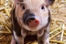 Piggies / by Franziska Brunner
