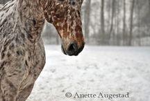 Animaux / Chien,chevaux....