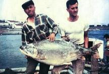 BIG fish story. . .