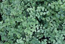 PDN 2016 New Plants--May 20, 2016 / Every year, we re-vamp our entire perennial plant catalog and bring in hundreds of new perennial plants as well as bringing back your favorite perennials from the past.
