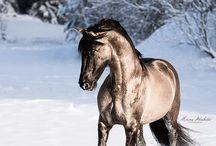andalusiske hester
