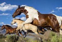 Mustang awe