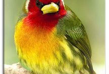 Red head / Bird