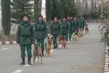 Saving Lives in Azerbaijan / Conflict with Armenia and the collapse of the Soviet Union left much of Azerbaijan littered with landmines. The Government of Azerbaijan requested MLI's assistance in building a mine detection dog capacity and since 2005 MLI has donated 25 dogs and has provided medical assistance and vocational training to many survivors.