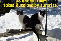 While You Were Out - Olympic Edition  / Didn't you know that cats participated in this year's olympics too? Take a look and you might learn something new!