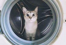 /ᐠ。ꞈ。ᐟ\ ~ Cat ~ /ᐠ。ꞈ。ᐟ\