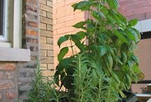 Jardim / Herbs