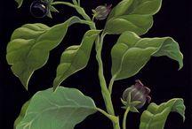 Plantys