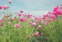flowers / by Marja