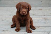 Wij willen een hondje papa!