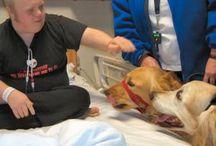 Terapie hond