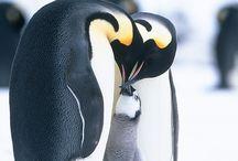 pingvin m.m