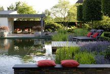 Trädgård vatten