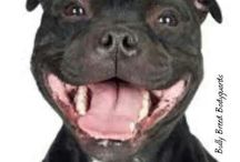 Pit Bull Smiles / by Sherri Webster