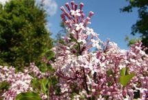 Planter til vår hage