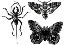 bugs / by Juanita McCue