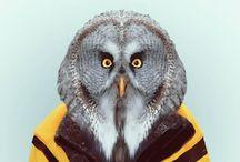 Zoo Portraits / AnimalPhoto