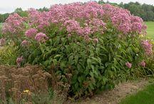 Remedy Sources / Plant Kingdom, Mineral Kingdom